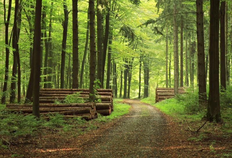 Trüffel Wälder