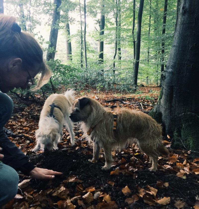 Sabine Hörnicke mit ihren Trüffelhunden