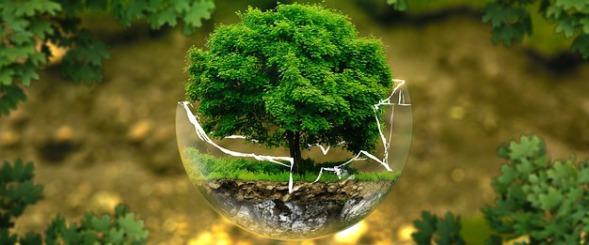 Baum in einer gläsenden Kugel, die die Welt darstellt